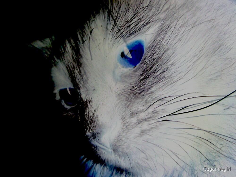 Blue eyed kitty by Cayannagirl
