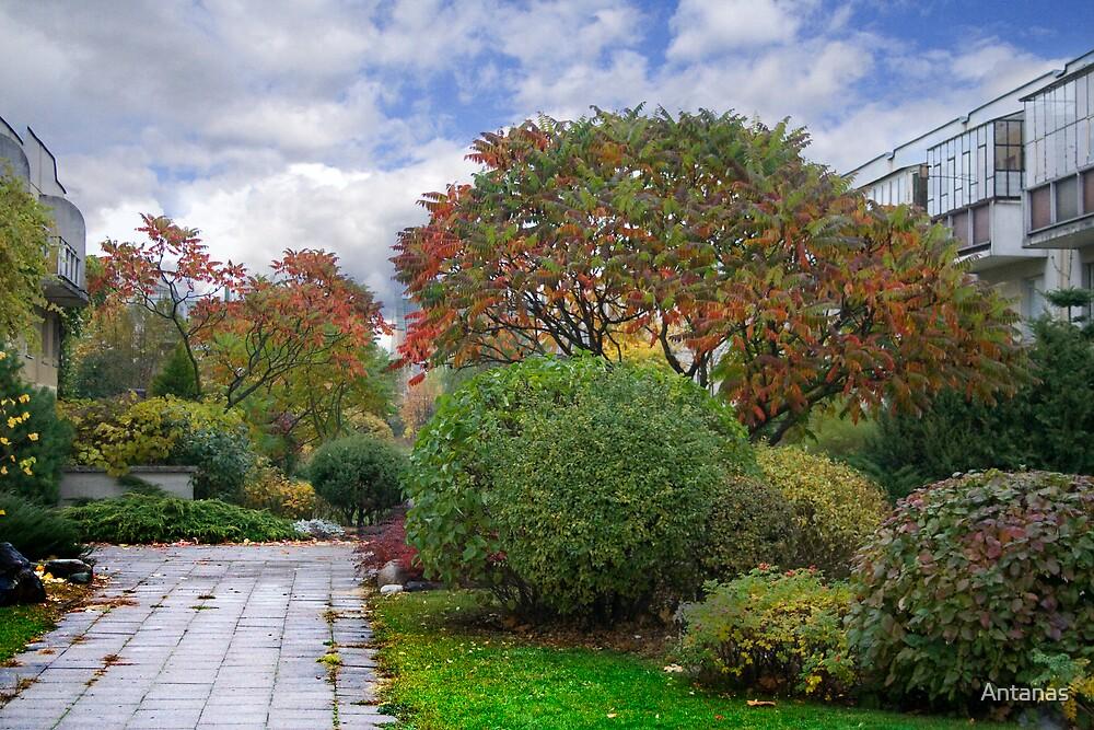 Autumn in my street (VILNIUS) by Antanas