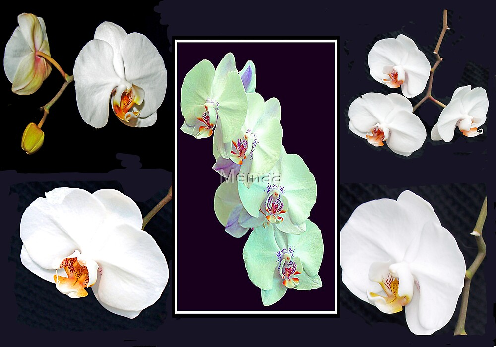 Orchids by Memaa