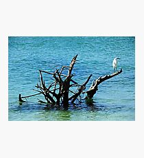 Snowy Perched On Driftwood Photographic Print