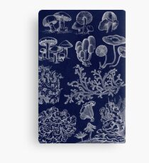 Fungus And Lichen Chart Canvas Print