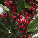 Berries in the Snow at Christmas by neldamays