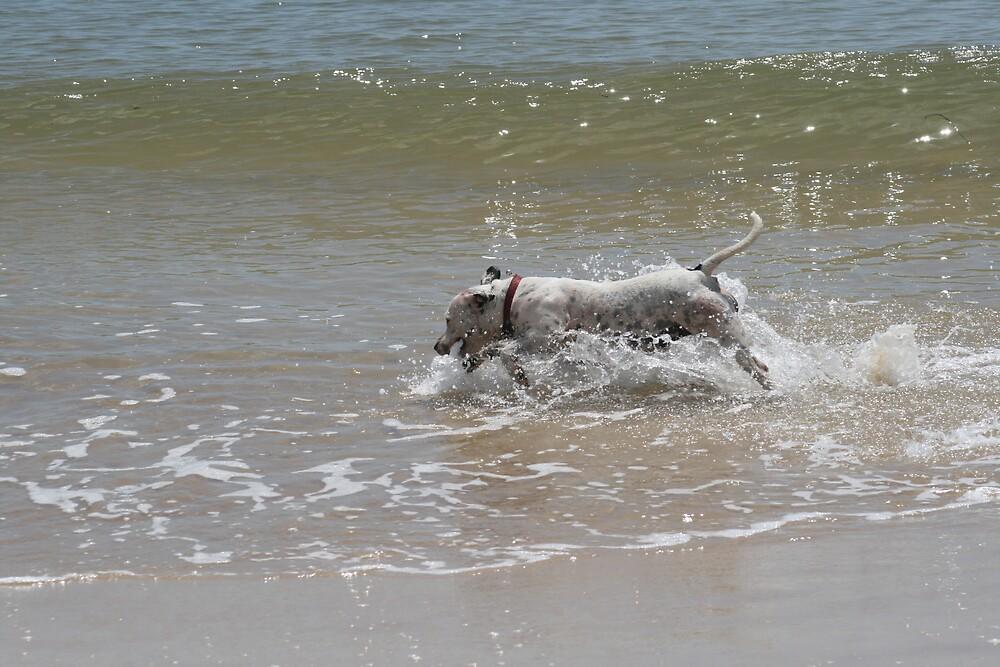 Dog on the Beach by AnnetteK