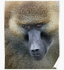 EYES OF A BABOON Poster