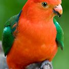 King Parrot by Michael Eyssens