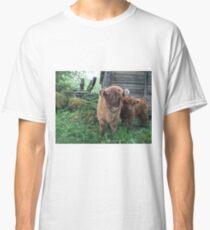 Scottish Highland Cattle Calves 1506 Classic T-Shirt