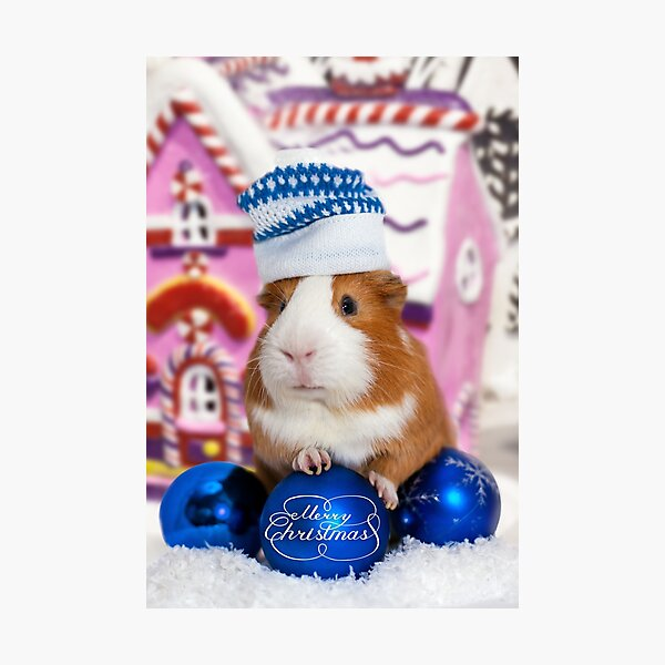 Merry Christmas with guinea pig Photographic Print