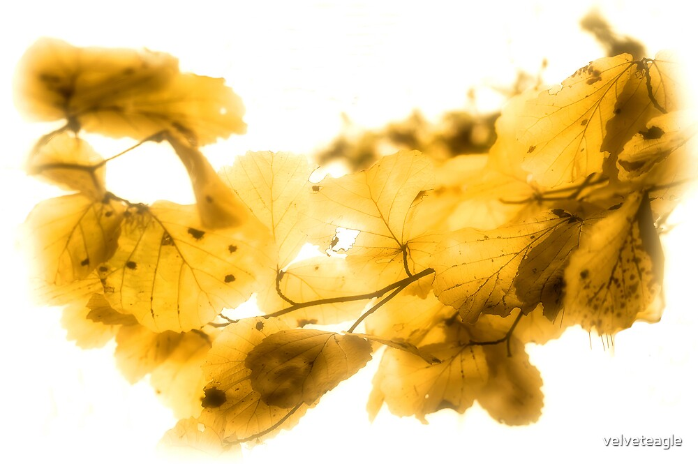 Mellow Fall by velveteagle