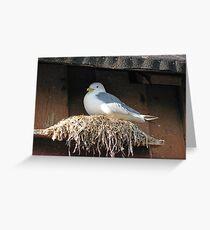 Nesting Seagull Greeting Card