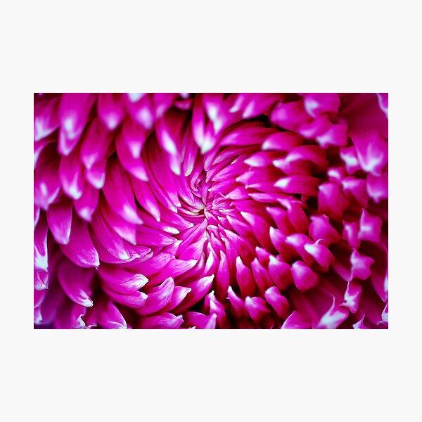 Pink Swirl Photographic Print