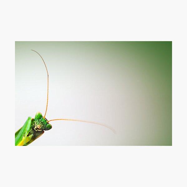 Mantodea Photographic Print