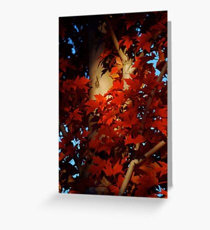 Autumn Blaze III Greeting Card