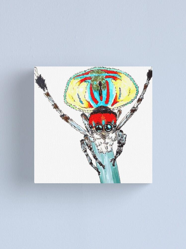 Alternate view of Peacock spider Maratus volans Canvas Print