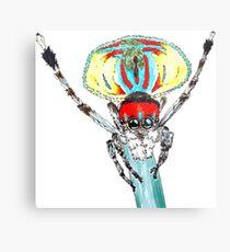 Peacock spider Maratus volans Metal Print