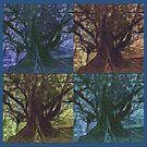 Moreton Bay Fig Trees in all seasons by jennyjeffries