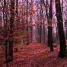 Autumn walk in the forest by ienemien