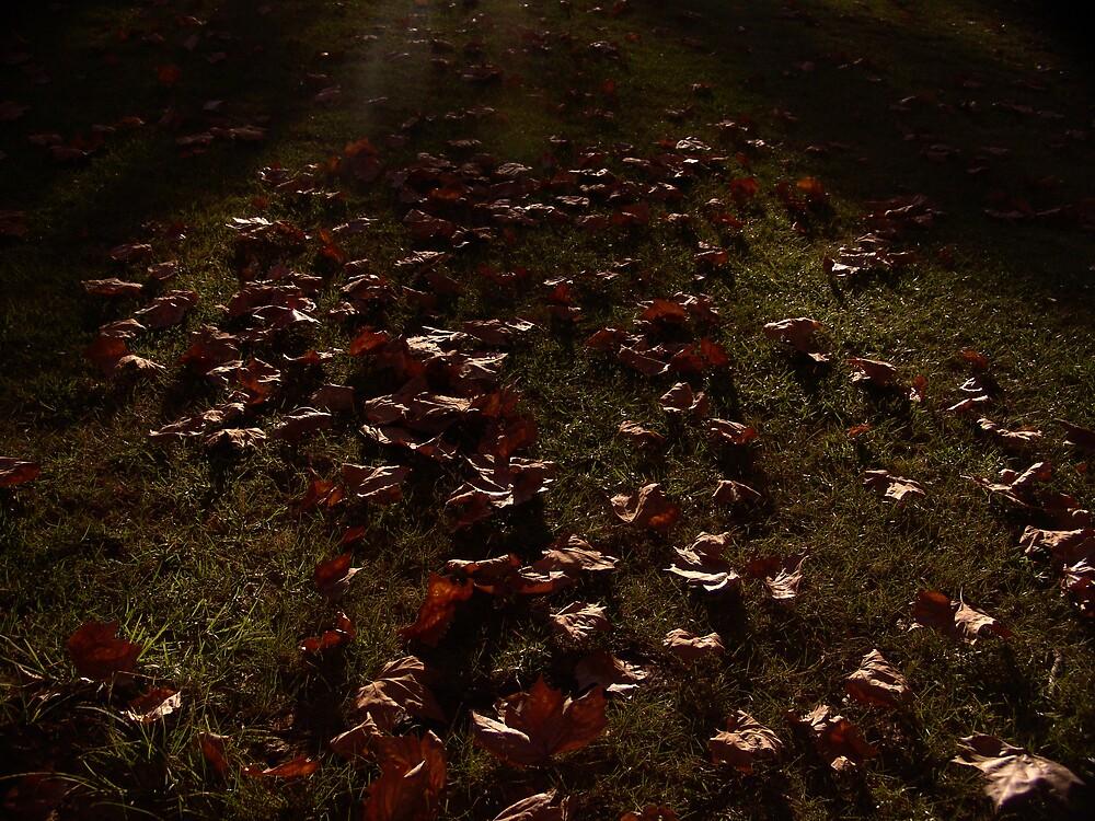Leaves of Matilda Bay... by Wojtek