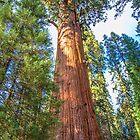 USA. California. Sequoia National Park. General Sherman Tree. by vadim19