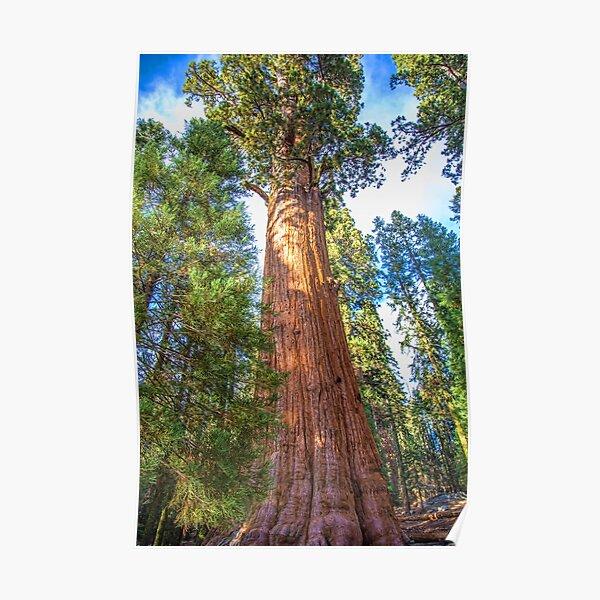 USA. California. Sequoia National Park. General Sherman Tree. Poster