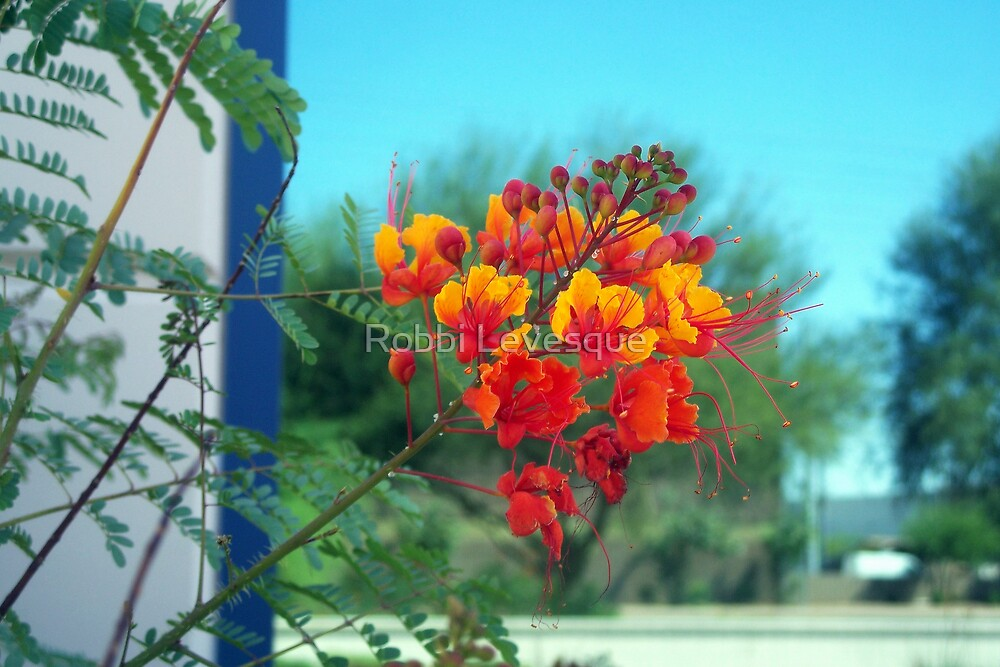 Red Bird Of Paradise by down23