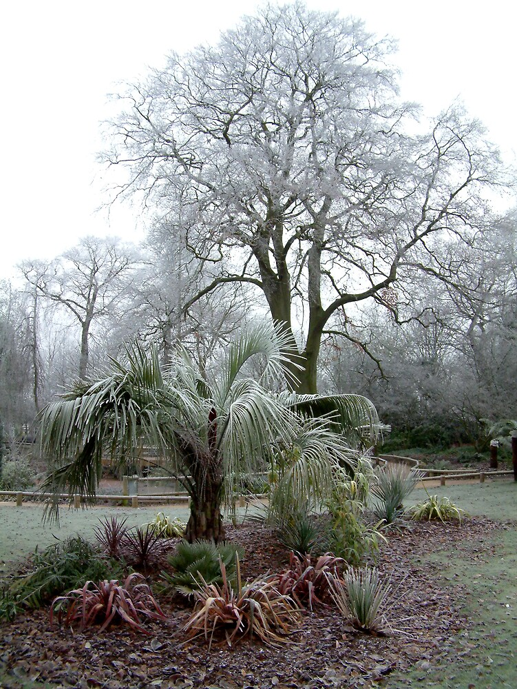 'Frosty Morning in a City Park' by Mike O'Brien