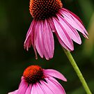 Petals And Quills by Debbie Oppermann