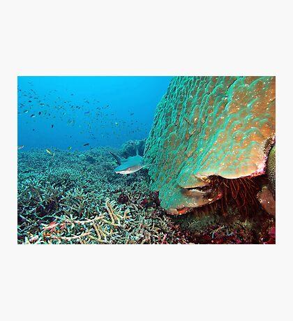 Reefy Photographic Print