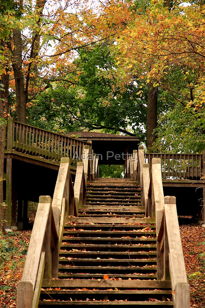 Leafy Stairs by Adam Petty