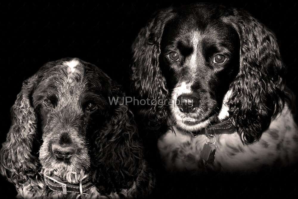 Friends... by WJPhotography