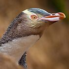 Yellow-eyed penguin by Johan Larson
