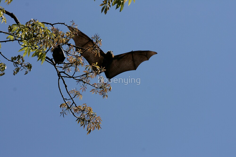 The Bat coming by houenying