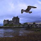 Bird on the Wing by Alan Findlater