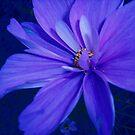 Flower Blues by Dawn B Davies-McIninch