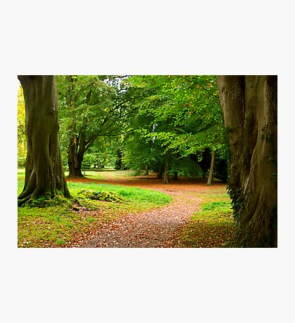 Walk in the Woods Photographic Print