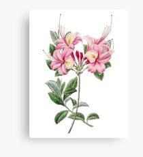 Azalea Flower, Vintage Floral Illustration, Azalea Flowers Canvas Print