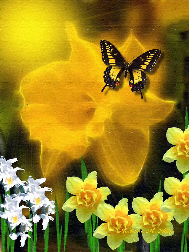 ~ DAFFODIL DELIGHT ~ by Madeline M  Allen