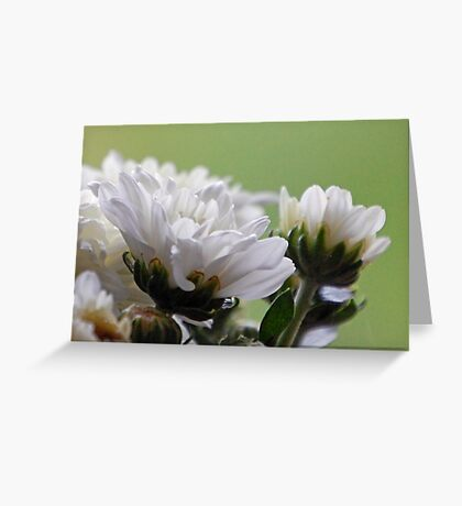 Nature's Patterns & Textures Greeting Card