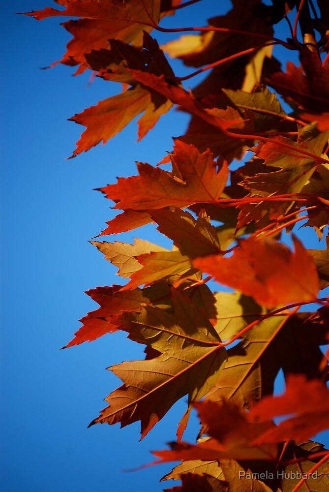 Autumn Blaze II by Pamela Hubbard
