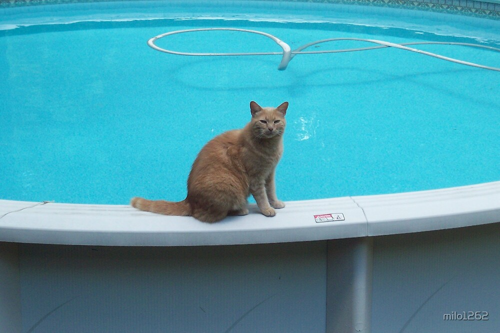 Milo loves the pool by milo1262