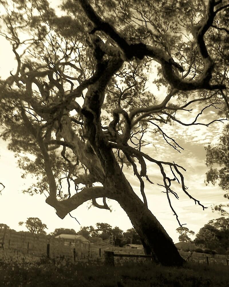 Old spook tree by Miranda Sedman