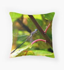Sweetflag Spreadwing Shows Off His Flags Throw Pillow