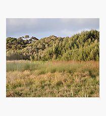 Brackish Wetland & Swamp Scrub Photographic Print