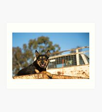 King Of The Kelpies & His Hilux Ute....... Art Print