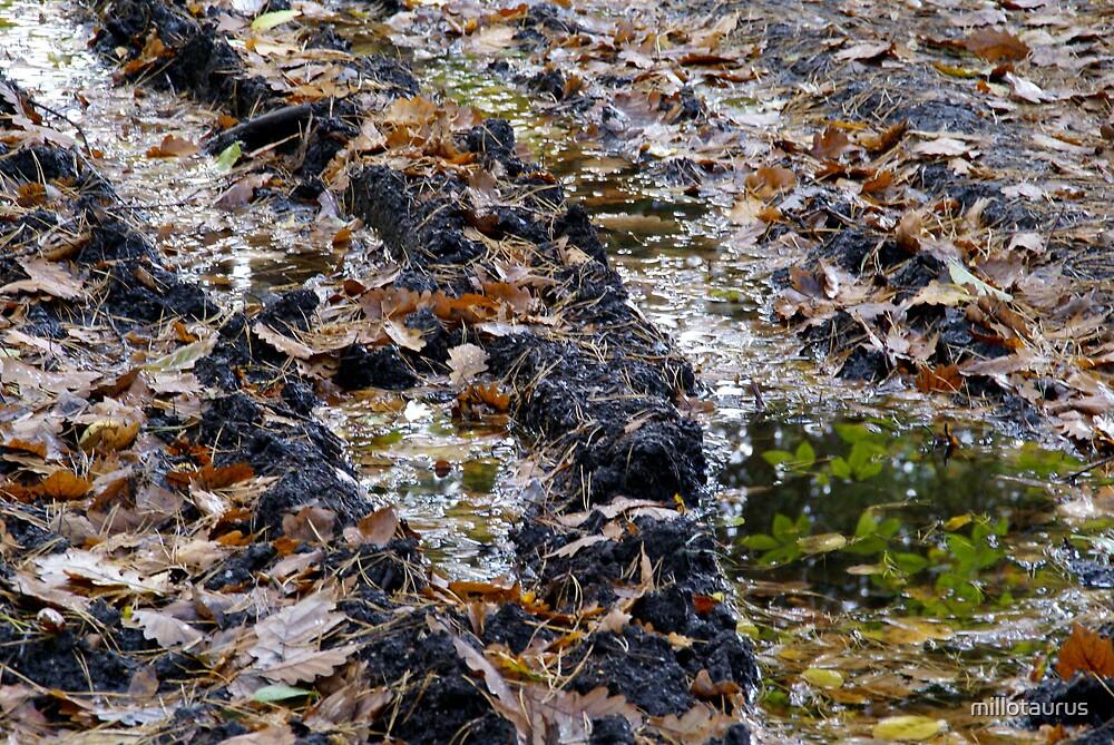 Muddy reflex... by millotaurus