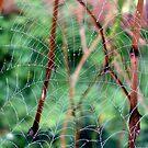 Web by ailene