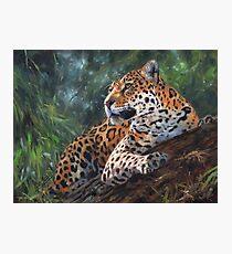 Jaguar in Tree Photographic Print