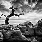 Twisted Tree - Canyonlands National Park, Utah by Kathy Weaver