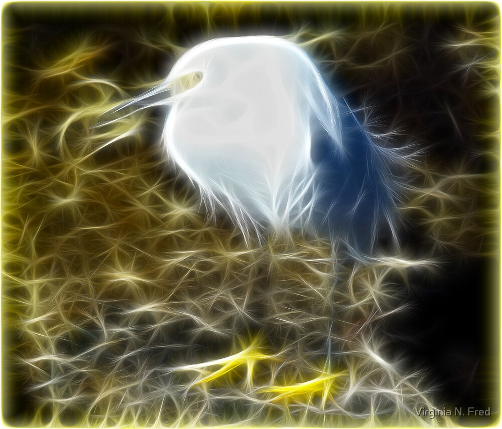Fractalius White Egret by Virginia N. Fred