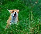 Foxcry by Foxfire
