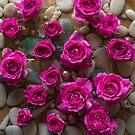 Deep Pink Dreams.  by Alison Lee Cousland